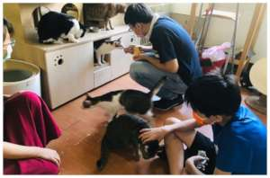 Youth participating stray cats caring plan