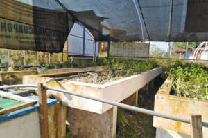 After the fire - empty grow beds
