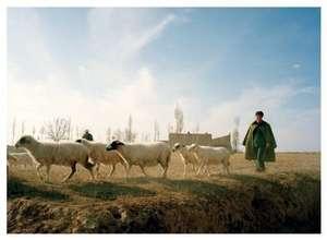 Ningxia shepherd smiling in morning mist
