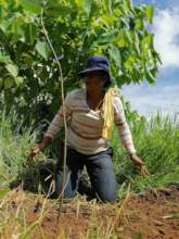 Indigenous women from the community planting