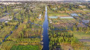 The Xochimilco wetland