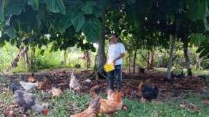 Mrs. Vistin feeding chickens