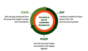 Circularity of the biodigester system