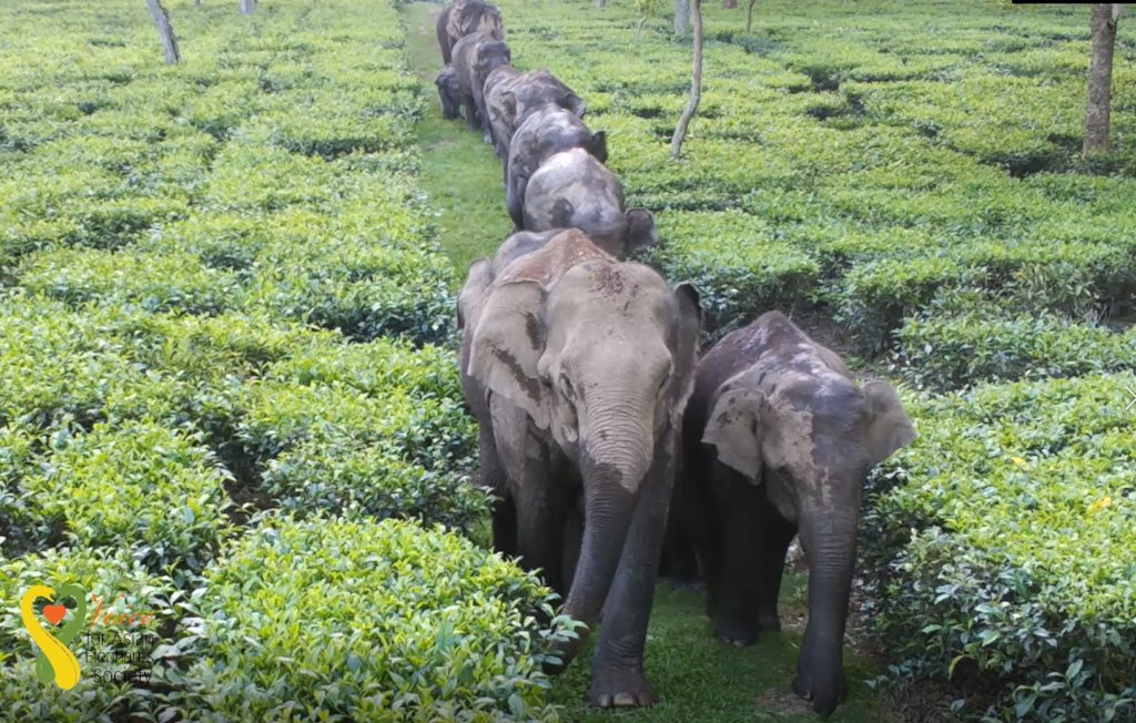 Saving 500 Elephants from Electrocution