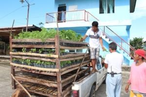 Mobile seedlings