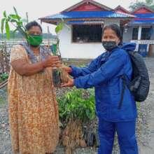 Distributing fruit tree saplings