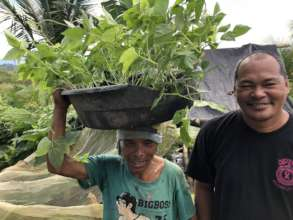 Seedlings and Organic Fertilizer for Food Supply