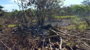 Willow flycatcher habitat cleared before migration