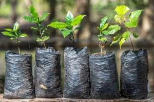 Adapting crops to the changing climate