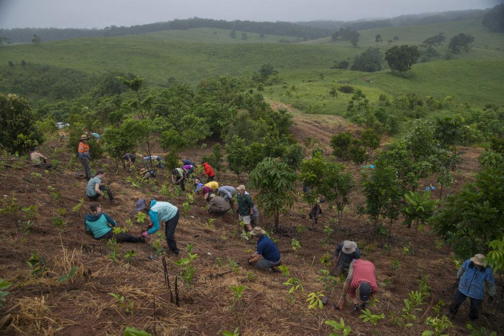 Restoring the worlds rainforests