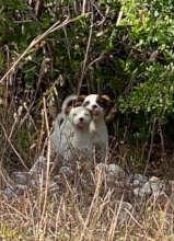 Eleuthera pups