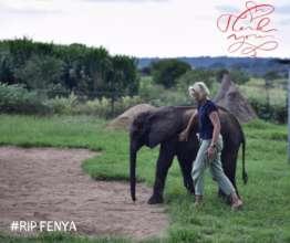 RIP Fenya
