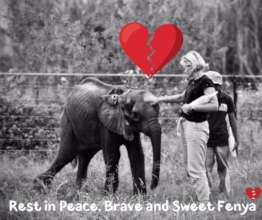 HERD - In memory of orphaned elephant calf, Fenya