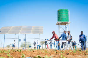 Our vegetable garden with solar-powered borehole
