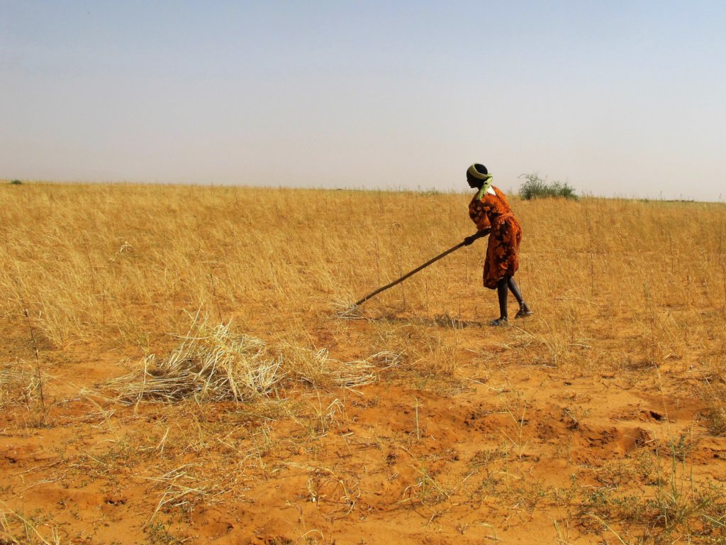 Healing the Desert with Trees in Darfur