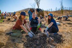 Volunteer of the planting of 15,000 trees in 2019