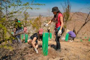 Volunteers of the planting of 15,000 trees in 2019