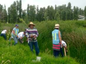 Don Chuy reforesting Xochimilco with the MOJA team