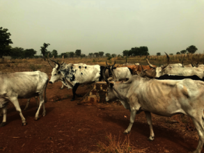 Many villages in South Sudan are pastoral
