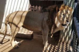 Taiz Zoo Rescue and Conserve Mission