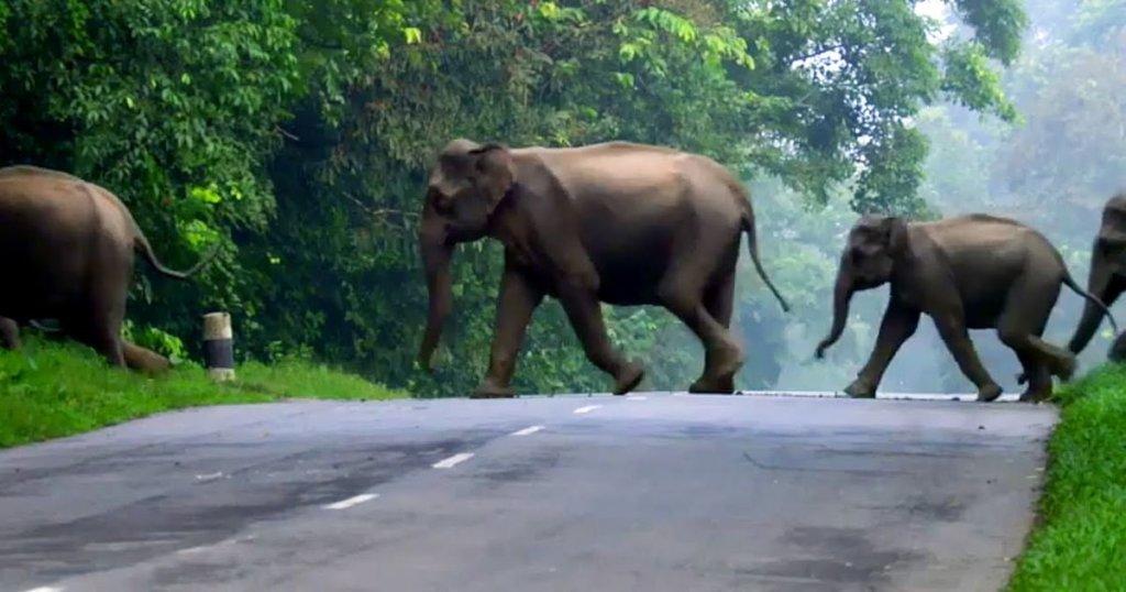Champions to Feed Odisha Elephants