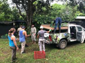 Transporting trees with volunteer's help