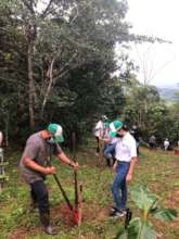 Volunteers working in a reforestation parcel