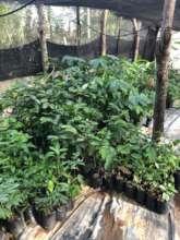 Seedlings in our Tree Nursery
