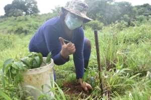 Local community member reforesting