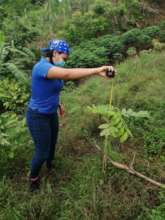 Monitoring each planted tree