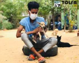 TOLFA staff care for over 500 animals daily