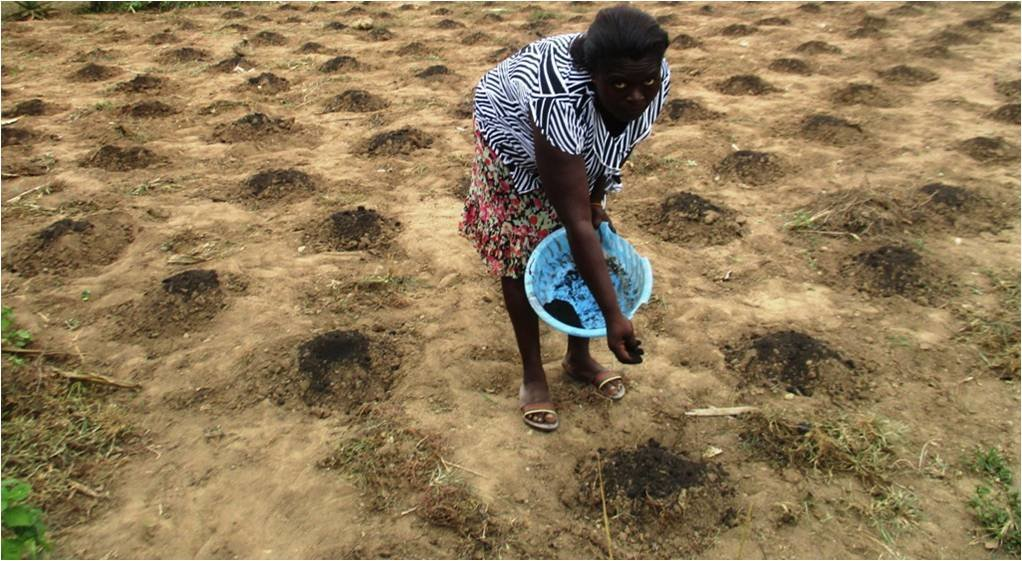 Climate smart agriculture for 500 farmers in Ghana