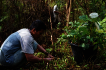 Tree maintenance at Cinta Raja III.