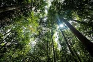 Beautiful intact rainforest in Sumatra.