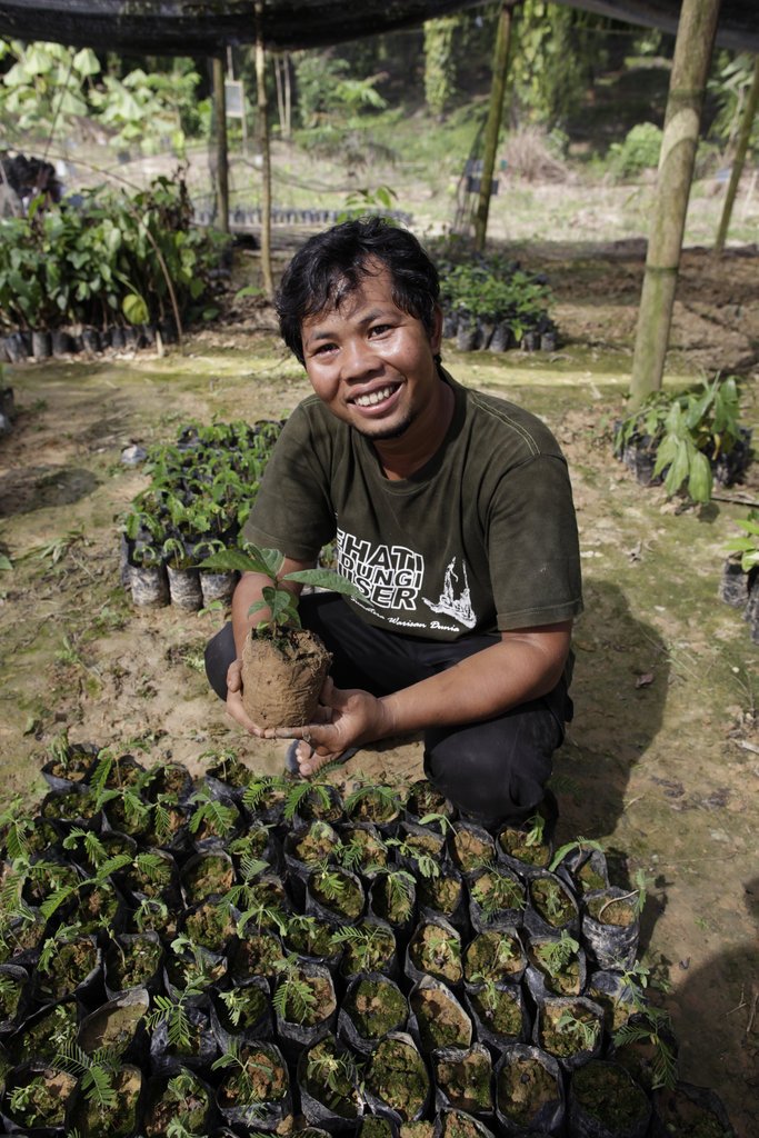 Replanting Rainforest in Sumatra, Indonesia