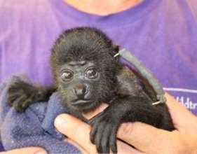 Mowgli - small, fragile and broken