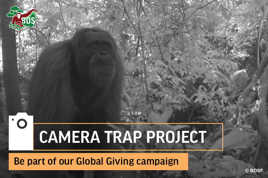 Help to Monitor and Protect Orangutans in Borneo
