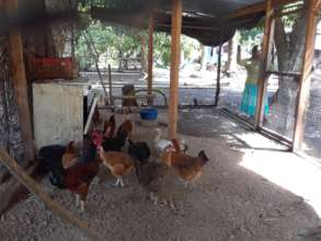 A newly constructed chicken coop