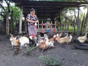 A woman feeding her chickens