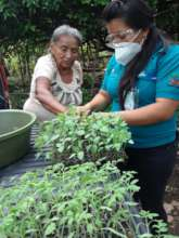A woman receives vegetable seedlings from staff