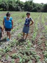 Women checking on their corn plants