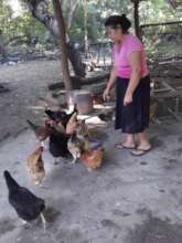 A woman tends to her chickens