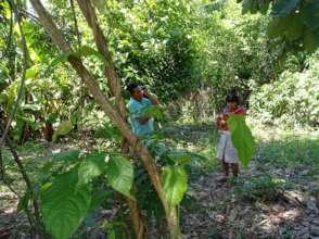 Ayahuasca growing