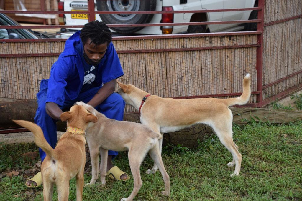 Making Happy Tails for Street Dogs in Rwanda