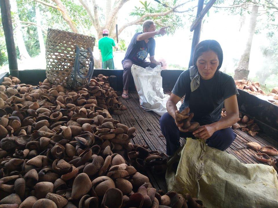 Support 1000 Philippine Coconut Farmers