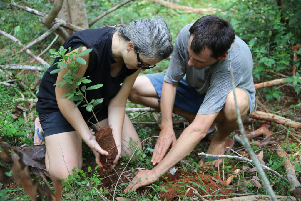 Auroville, India: Support a Tree in the Bio-region