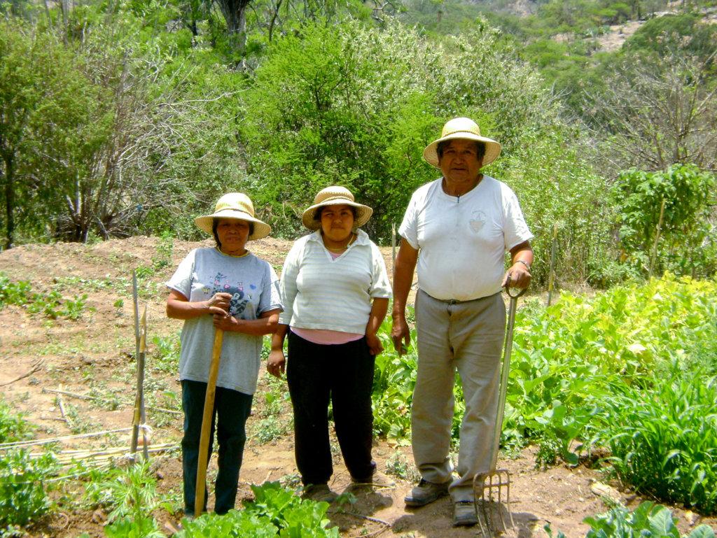 Nourish 25 families in Mexico's mountain ranges