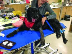 Balu was treated at DoveLewis after a snake bite