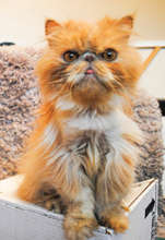 Support DoveLewis & help animals like Butterbean