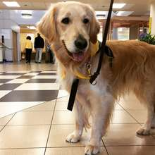 Gracie the therapy dog visits a local hospital